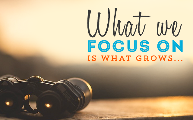 What we focus on